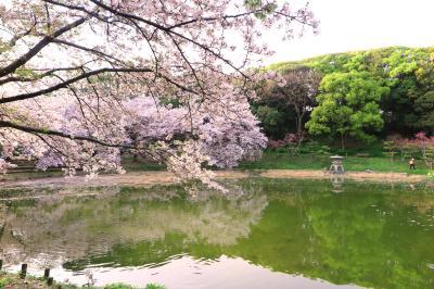 하나하쿠기념공원츠루미녹지, 봄 10