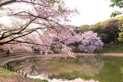 하나하쿠기념공원츠루미녹지, 봄 11