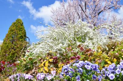 하나하쿠기념공원츠루미녹지, 봄 12