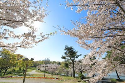 하나하쿠기념공원츠루미녹지, 봄 13