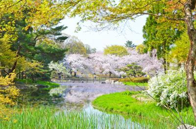 하나하쿠기념공원츠루미녹지, 봄 02