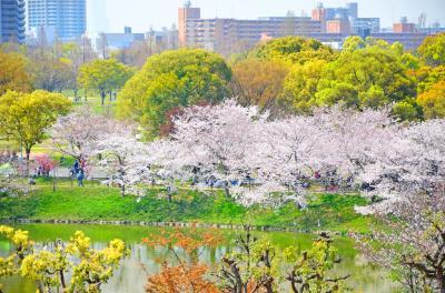 하나하쿠기념공원츠루미녹지, 봄 01