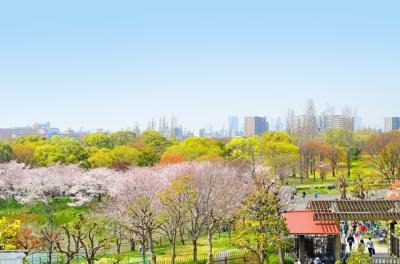 하나하쿠기념공원츠루미녹지, 봄 14