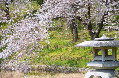 하나하쿠기념공원츠루미녹지, 봄 15