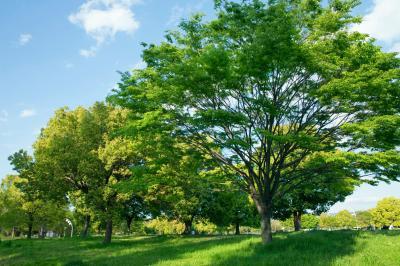 하나하쿠기념공원츠루미녹지, 여름 04