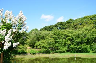 하나하쿠기념공원츠루미녹지, 여름 05