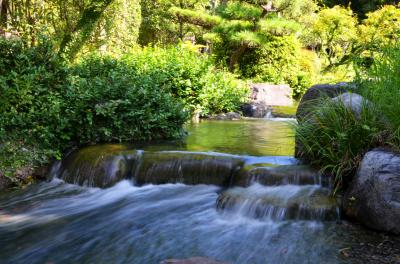 하나하쿠기념공원츠루미녹지, 여름 08