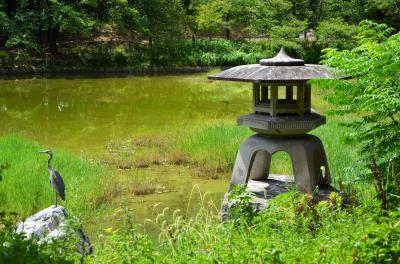 하나하쿠기념공원츠루미녹지, 여름 09