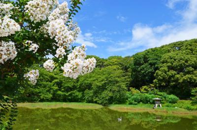 하나하쿠기념공원츠루미녹지, 여름 10
