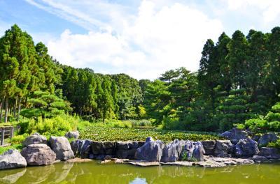 하나하쿠기념공원츠루미녹지, 여름 02