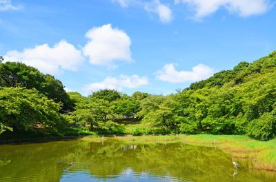 하나하쿠기념공원츠루미녹지, 여름 11