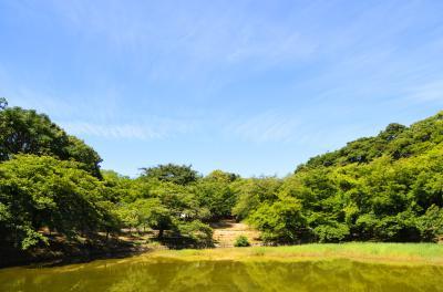 하나하쿠기념공원츠루미녹지, 여름 13