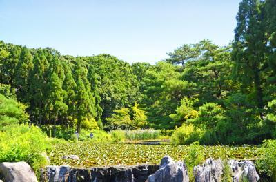 하나하쿠기념공원츠루미녹지, 여름 14