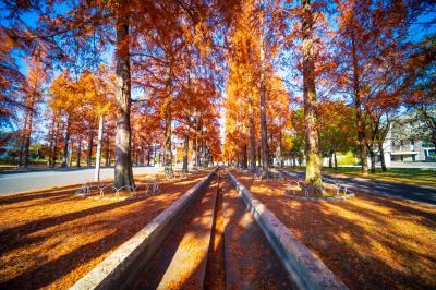 하나하쿠기념공원츠루미녹지, 메타세콰이어길 가을 풍경 07