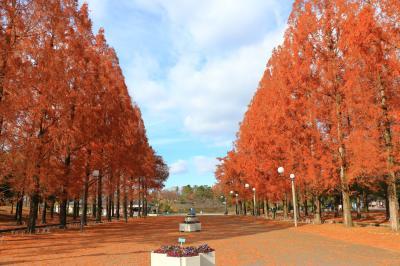 하나하쿠기념공원츠루미녹지, 메타세콰이어길 가을 풍경 01