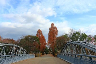 하나하쿠기념공원츠루미녹지, 메타세콰이어길 가을 풍경 13
