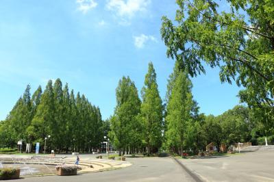 하나하쿠기념공원츠루미녹지 14