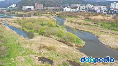 황룡강 습지