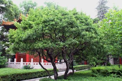 사철나무 01