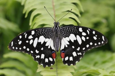 영국 나비들
