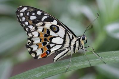 영국 나비들 03