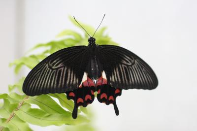 영국 나비들 02