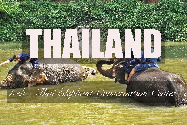 제10화 - 코끼리의 천국, 타이 코끼리 보호 센터