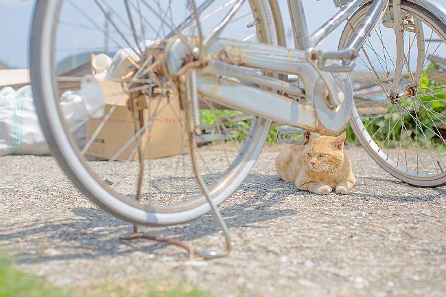 5.고양이 섬, 아이노시마(번외편)