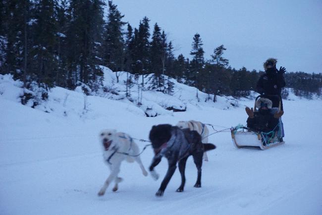 #3. 옐로나이프의 겨울 액티비티, 개썰매 체험