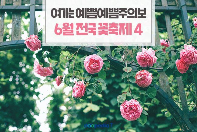 여기는 예쁨예쁨주의보, 6월 전국 꽃축제 4