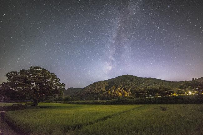 은하수가 머무는 곳, 보은 느티나무