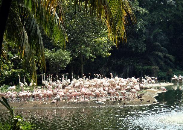 싱가포르 주롱새공원