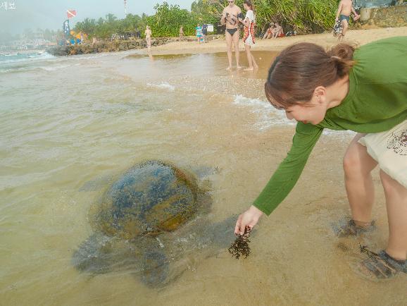 걸어다니다가 바다거북이를 만나는, 스리랑카 히카두와