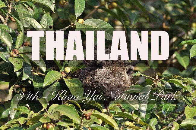 제34화 - 태국에서 가장 거대한 국립공원, 카오야이