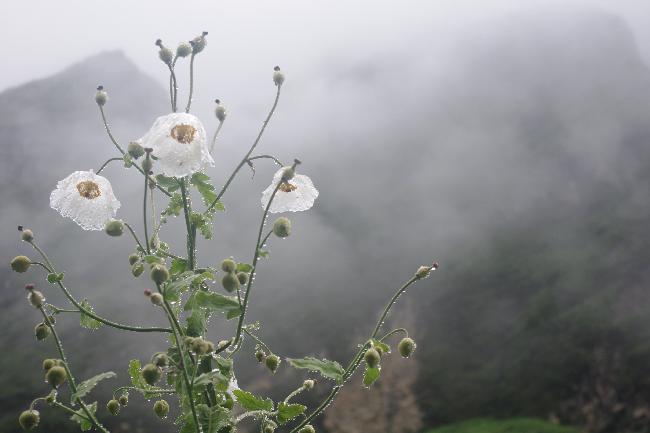 안나푸르나에서 그 꽃을 보았는가?-2편