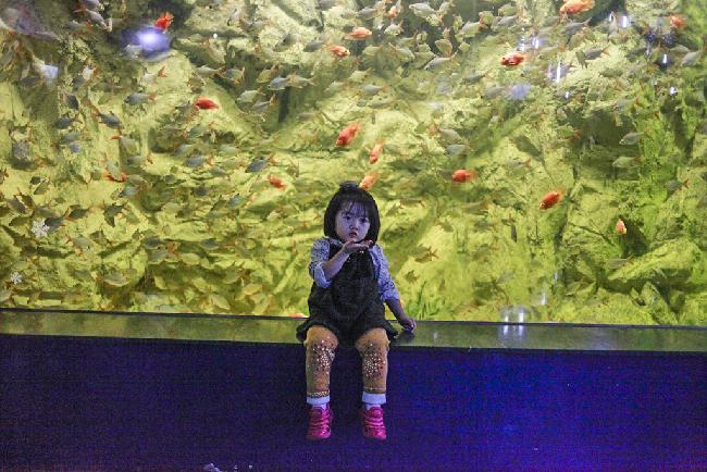 해양생물들의 우주, 대전 아쿠아리움#2