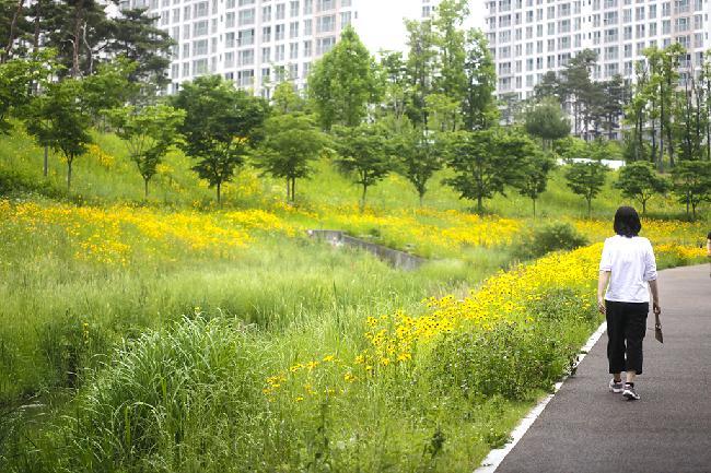 야생화로 빛나는 유월의 제천 근린공원