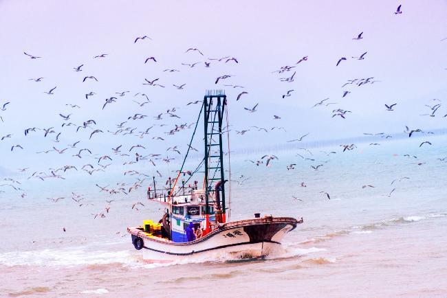 칠산바다의 꽃 향화도: 칠산타워와 아침 갈매기군무