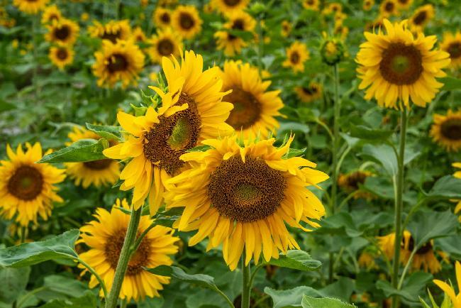 창포원에 여름꽃들이 만개했다 !!!