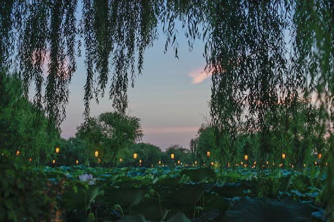 언택트 연꽃 여행지 #1 부여 궁남지의 밤