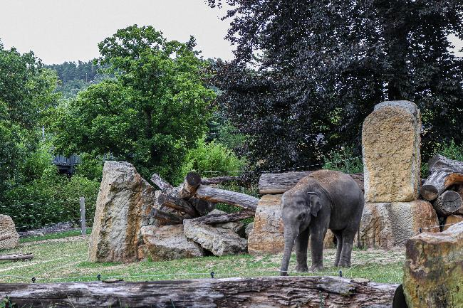 프라하 동물원에 가면