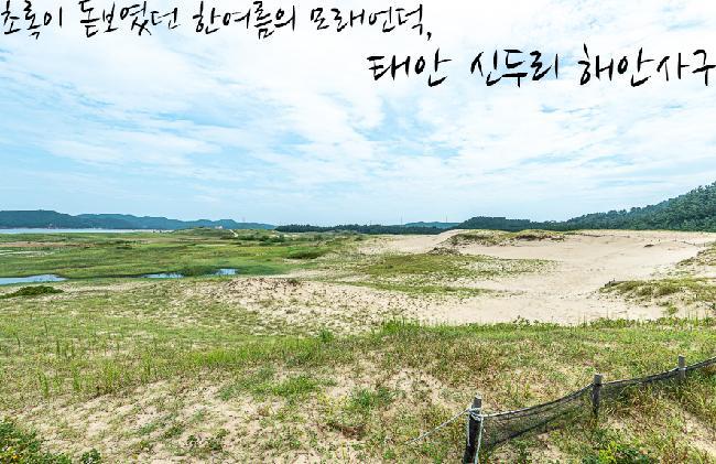 초록이 돋보였던 한여름의 모래 언덕 : 신두리 해안사구