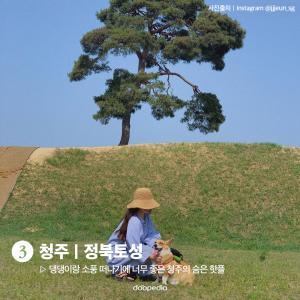 3. 청주 정북토성  댕댕이랑 소풍 떠나기에 너무 좋은 청주의 숨은 핫플  (사진 출처 인스타그램 @jjjeun_sg)