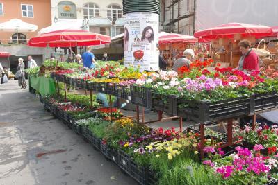 주로 현지인들이 아침을 시작하며 꽃을 구매하는데,  이들의 여유로운 모습에서 이곳만의 정서가 전달되는 듯하다.  일정이 가능하다면 현지인들 틈에 섞여 아침 일찍 시장에서 꽃을 사보는 건 어떨까?  여행지를 더욱 로맨틱하고 특별하게 만들어줄 것이다.
