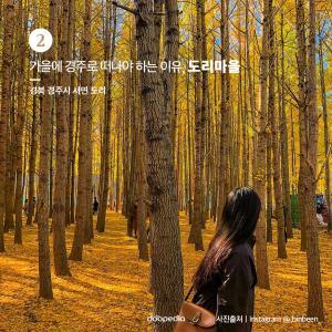 ② 가을에 경주로 떠나야 하는 이유, 도리마을  > 경북 경주시 서면 도리  (사진 출처|인스타그램 @_binbeen__)