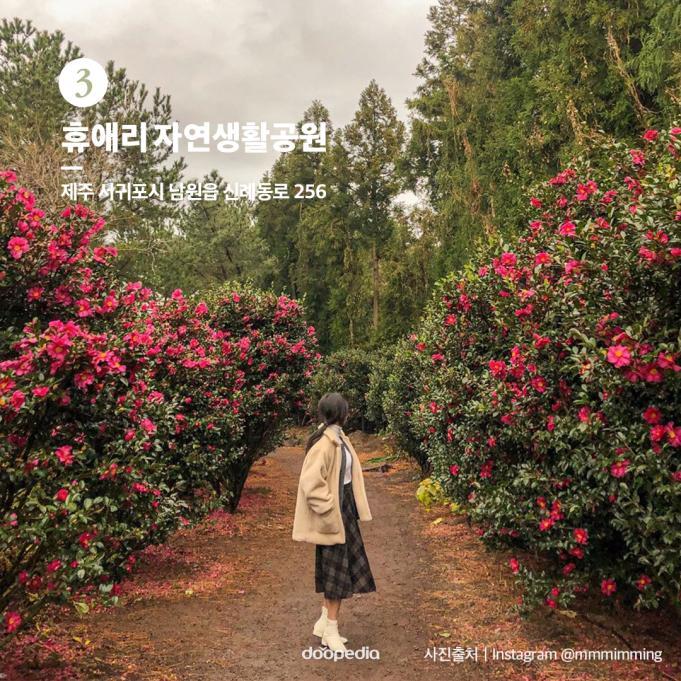 ③ 휴애리 자연생활공원  >제주 서귀포시 남원읍 신례동로 256  (사진 출처|인스타그램@mmmimming)