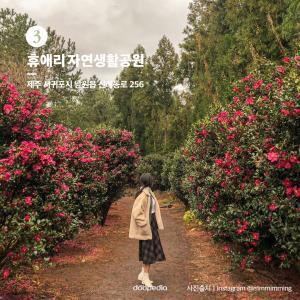 ③ 휴애리 자연생활공원  > 제주 서귀포시 남원읍 신례동로 256  (사진 출처|인스타그램 @mmmimming)