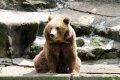 유럽 불곰