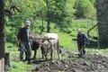 코커서스 산속의 밭을 가는 농부들