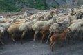이스마일 지방의 계곡에서 본 양떼와 목동